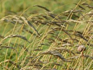 Filo d'erba - Haiku #1